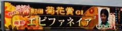 2013102菊花賞.jpg